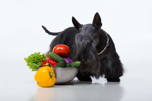 scottie and veggies