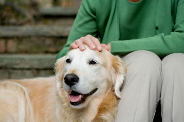 senior_dog_body_image_2