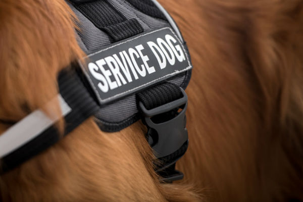 service dog body