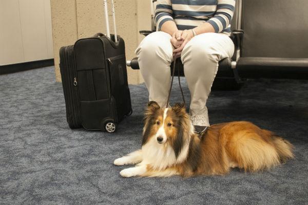 服务犬训练101-你需要知道的一切