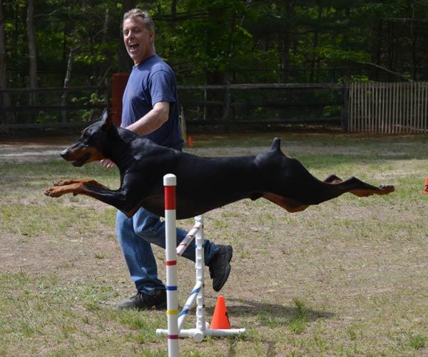 chester agility