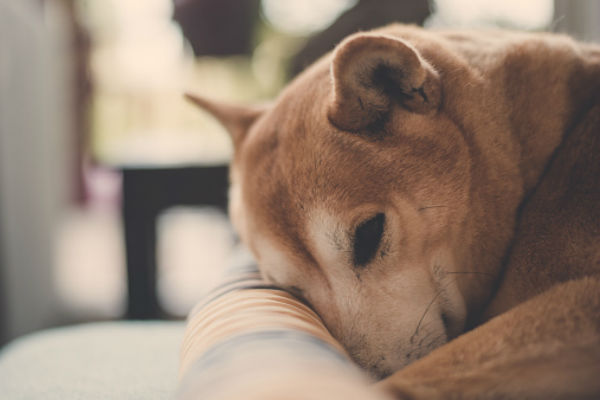 Dog Scared of Fireworks: How to Help Dogs Afraid of Loud Noises