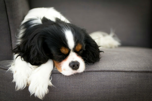Why Is My Dog Twitching in His Sleep? – American Kennel Club