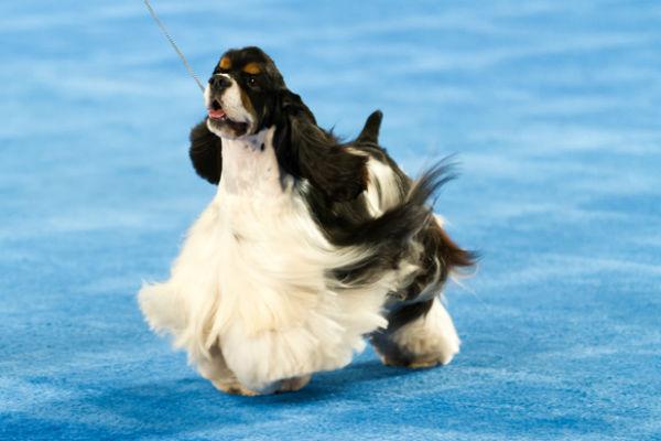 sporting dog