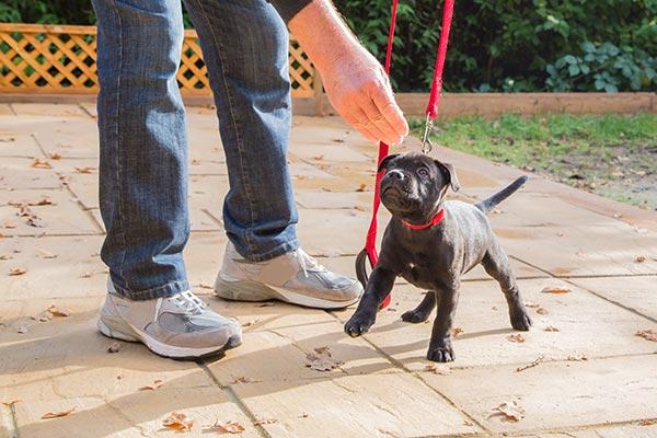 staff-pup-training