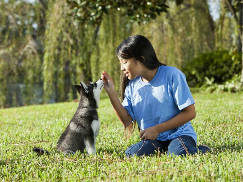 Benefits of AKC S.T.A.R. Puppy - American Kennel Club