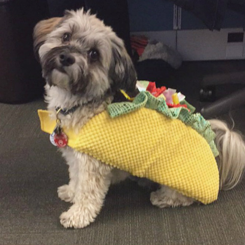 Check out this compilation of the funniest dog costumes. And if you just canu0027t get enough check out even more here. & Your Ultimate Dog Halloween Costume Guide u2013 American Kennel Club