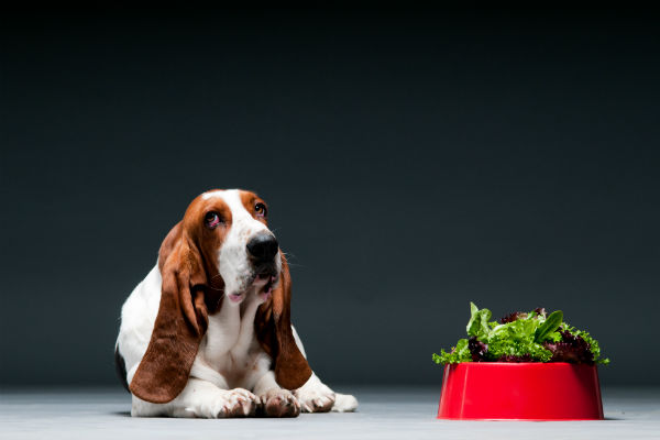 Akc Can Dogs Eat Kale