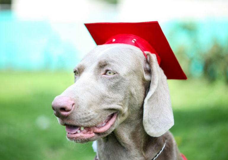 breeder education header