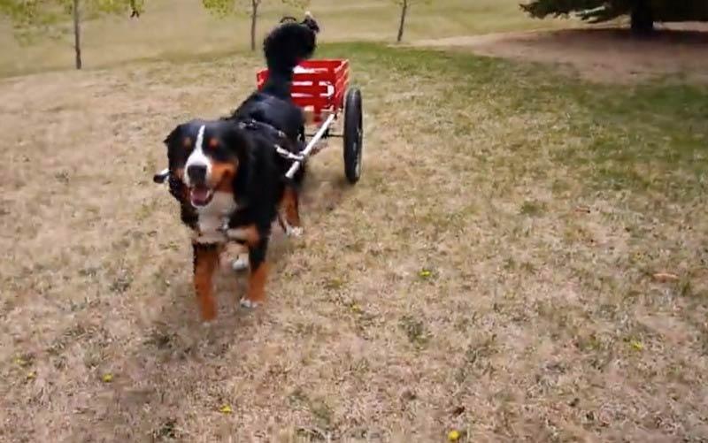 BMD pulling cart
