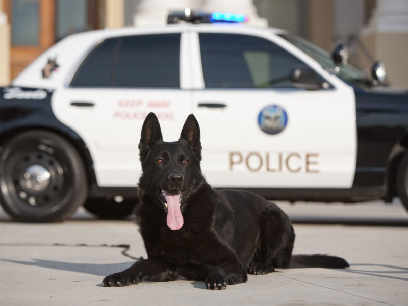 canine officer program header