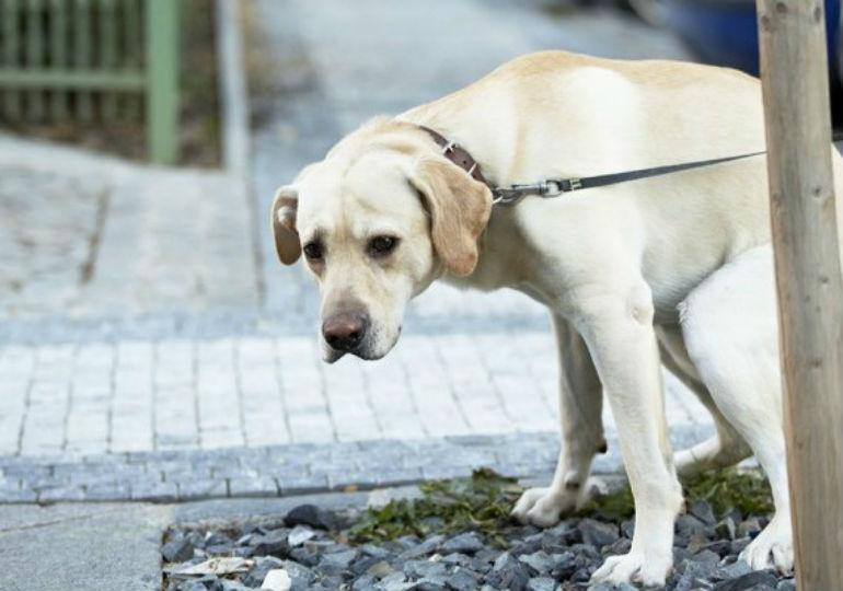 dog spin poop header