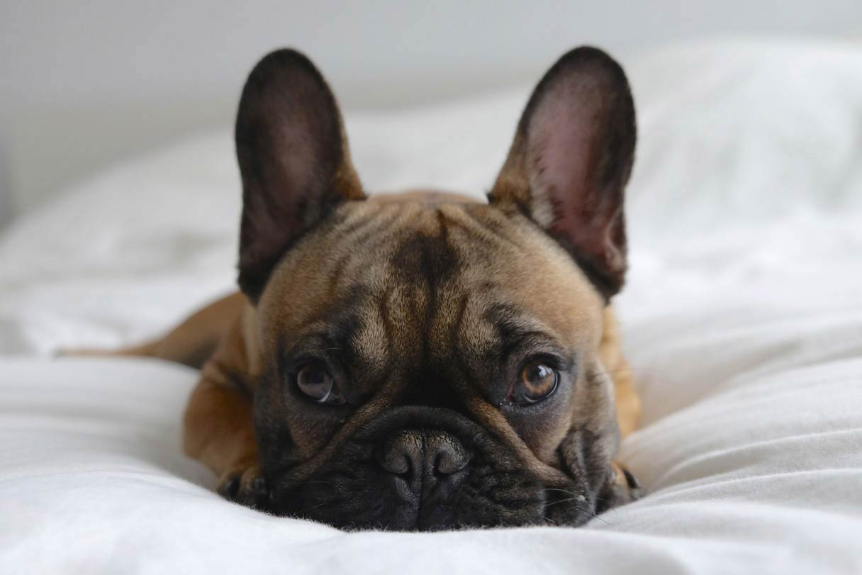 Rover Move Over Akc Offers Tips On Sleeping With Your Pet American Kennel Club