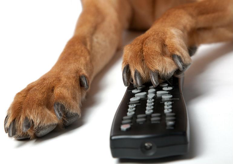 Watch Dogs Tilt