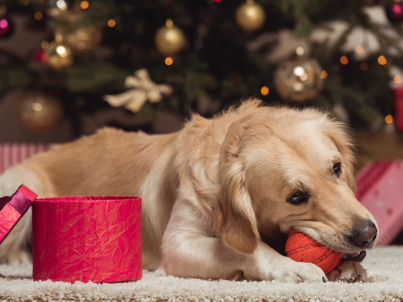 Large-dogs-holiday-header