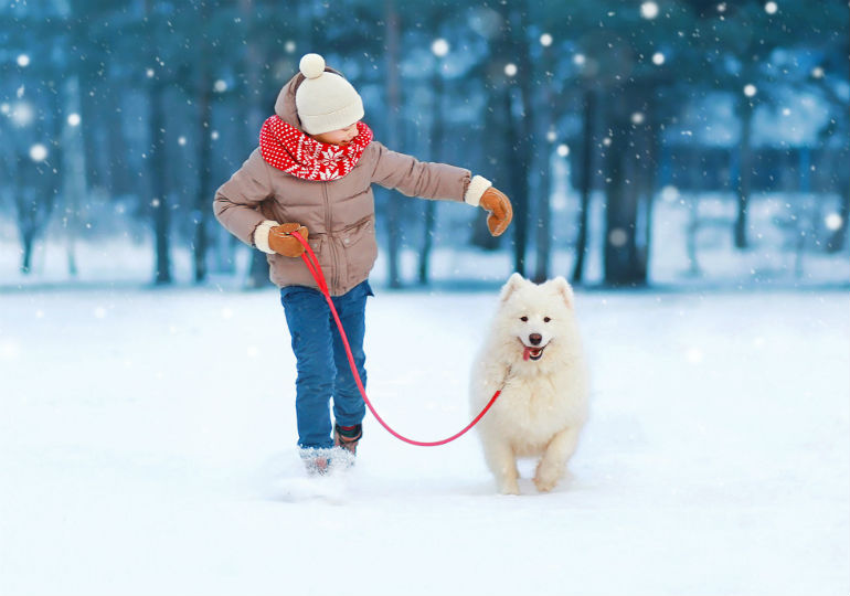 an ice and snow melt that s safe for dogs american kennel club