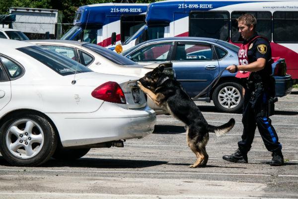 detection dog 1