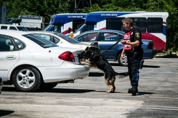 detection dog 2