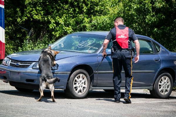 detection dog 5