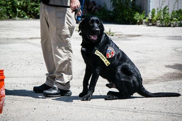 detection dog 7
