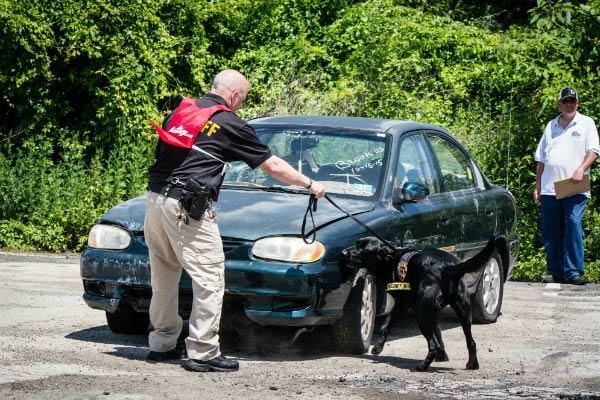 detection dog 8