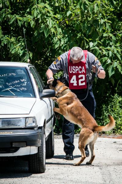 detection dog 9