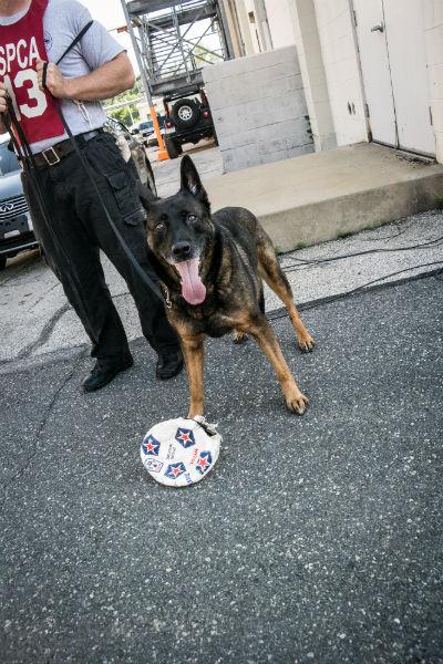 detection dog 10