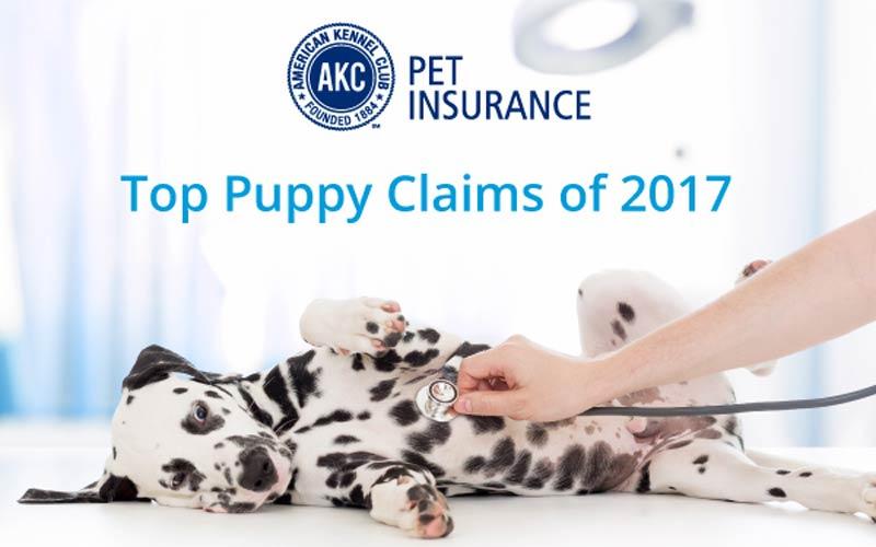 Top-Puppy-Claims-hero.jpg