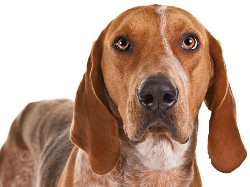 How Many Dog Breeds Can You Name In  Minutes