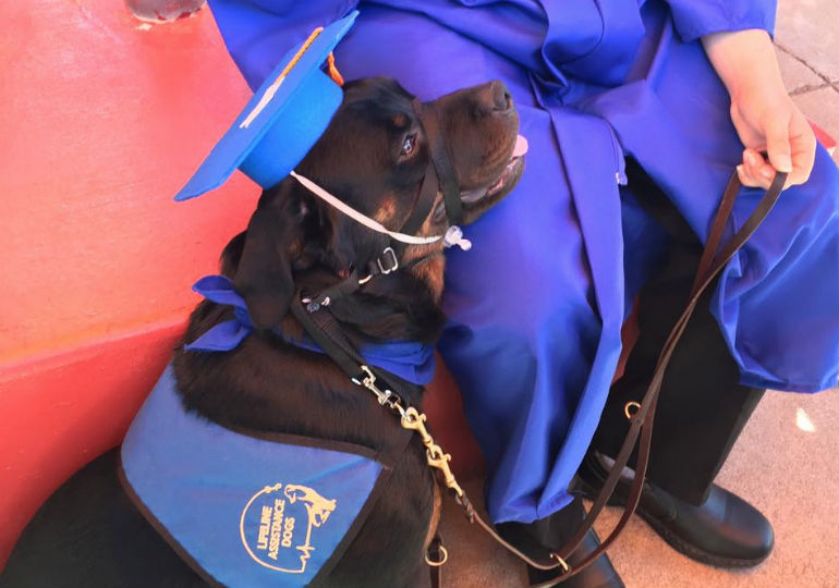 See A Service Dog In Training Graduate From High School