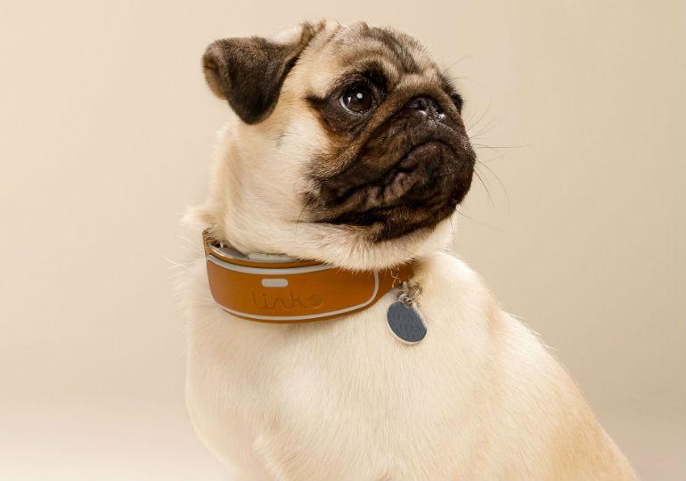 link pug header