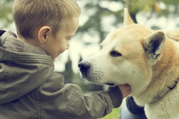 Pets Bring Kids With Autism Out Of >> How Dogs Help Children With Autism American Kennel Club