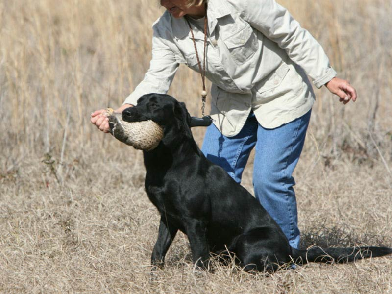 8 Breeds That Are Excellent Bird Hunters American Kennel Club