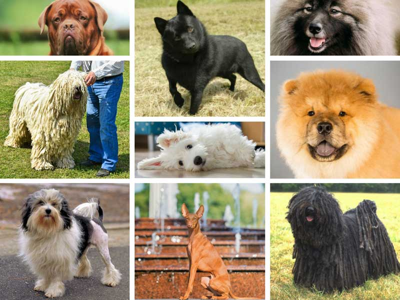 breed-plurals-hero