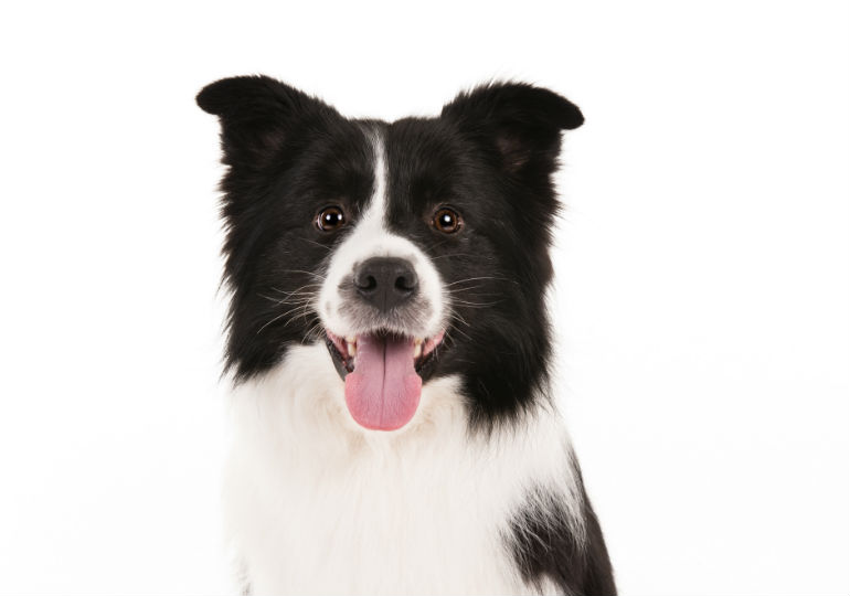 We Ask Dog Breeders Whats Your Brand American Kennel Club