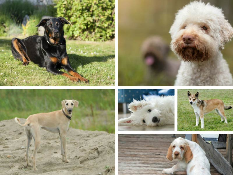 breeds you never heard of