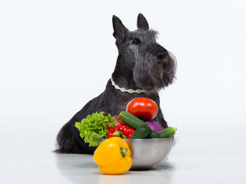 Can Dogs Eat Onions? – American Kennel Club