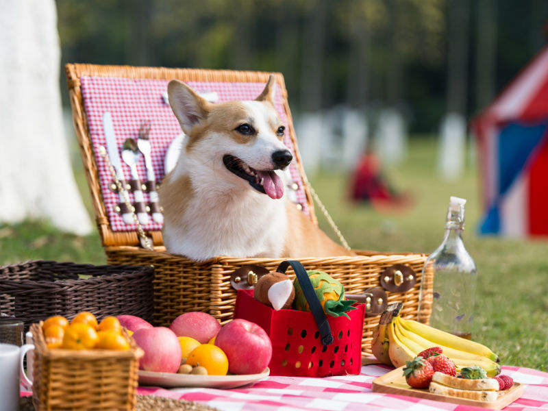 can_dogs_eat_summer_foods_hero