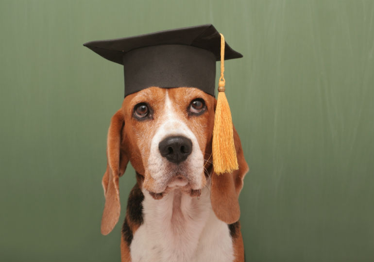 Go Back to (Dog) School with AKC Canine College