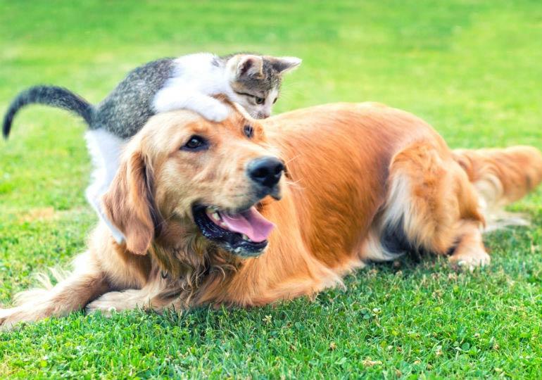 cat dog header