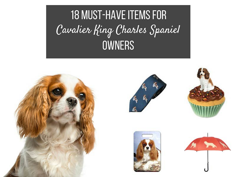 18 Items That Are Perfect For Cavalier King Charles Spaniel Owners