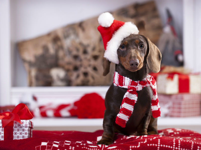 holidays with dog header