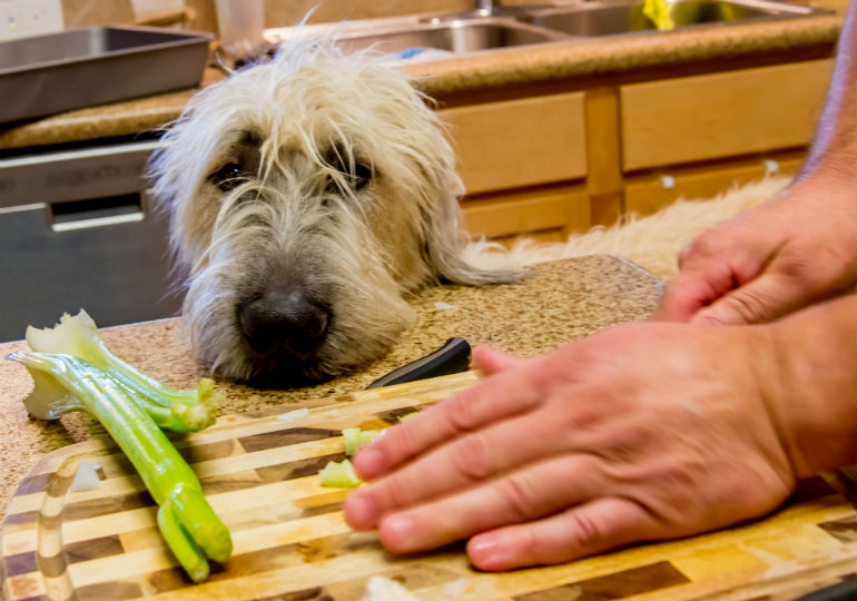 Can Dogs Eat Celery American Kennel Club