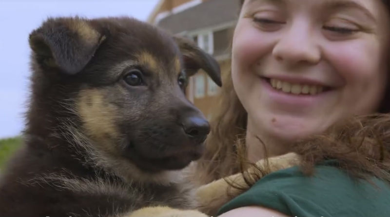 puppy raisers hero