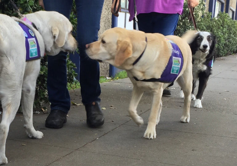 Therapy Dogs Bring Comfort to Families After Oakland Warehouse Fire