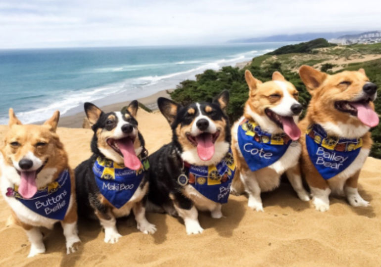 These Corgis On The Beach At CorgiCon Will Get You Through The Week