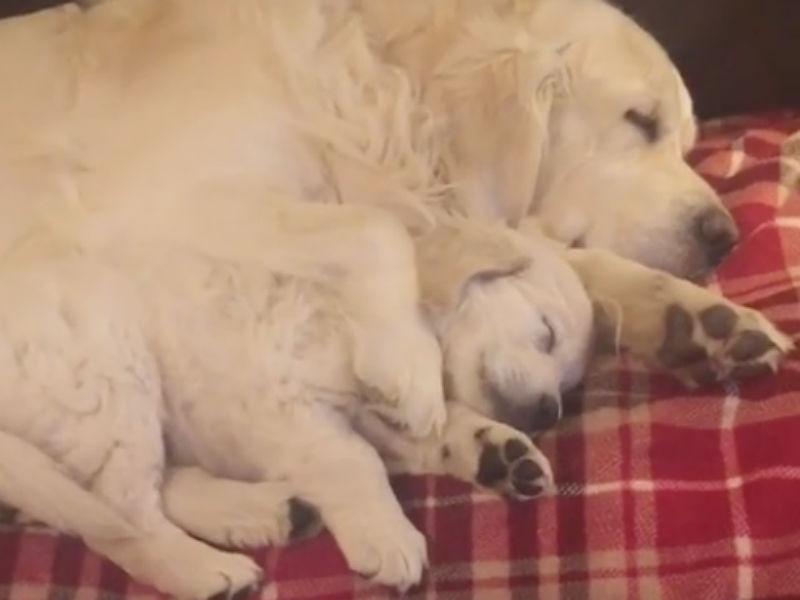 cuddling dogs header