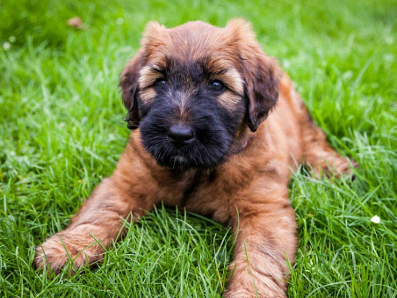 50 Cute Puppies You Ll Have To See To Believe American Kennel Club
