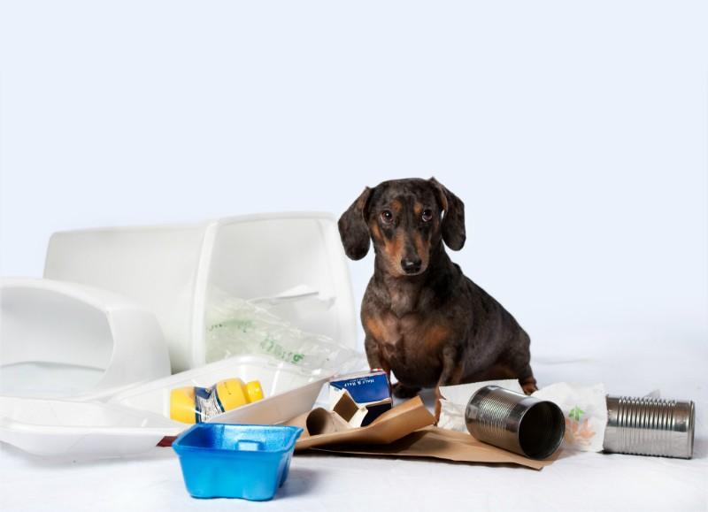 Dog in garbage header