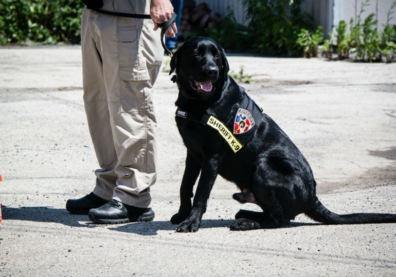 K-9s Sniff Their Way To Success At USPCA National Detector Dog Trials